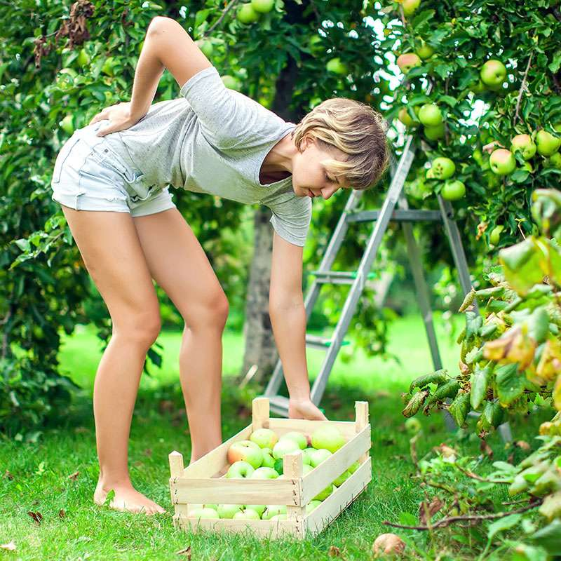 Woman picking apples with back spasms